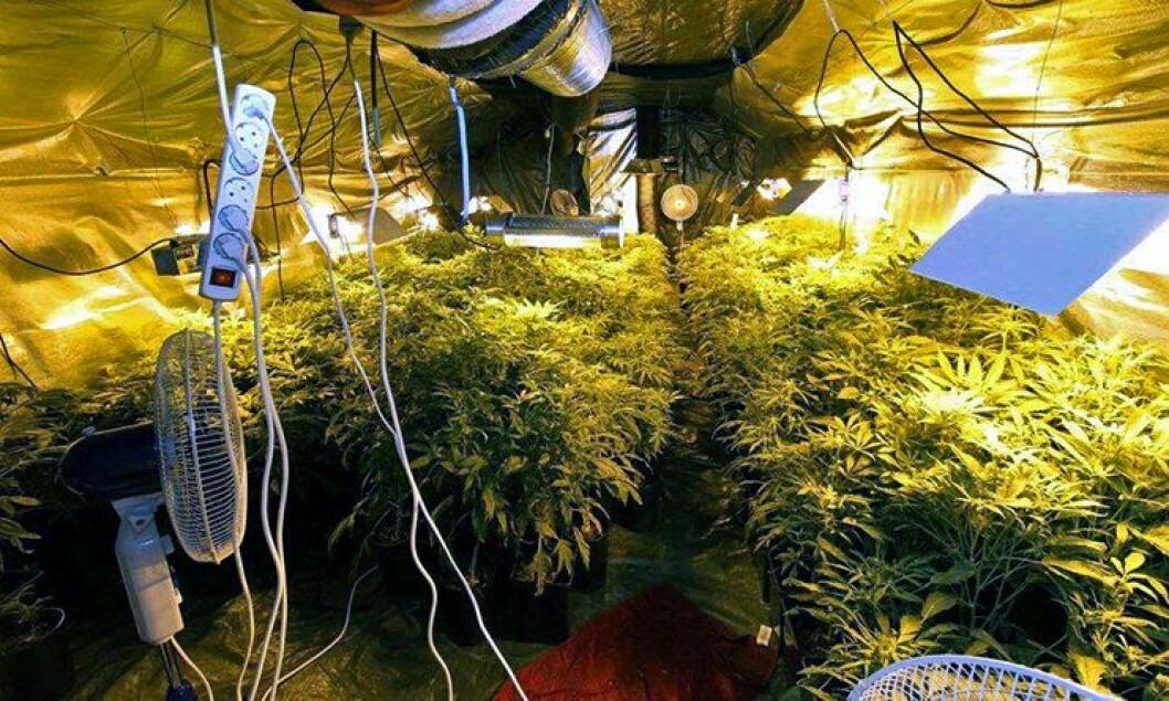 Marihuanaplantasjer settes opp i alt fra leiligheter til nedgravde containere.