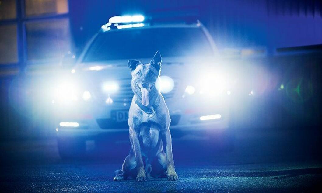 Politihunden Pelle og eieren vant saken i Oslo tingrett.