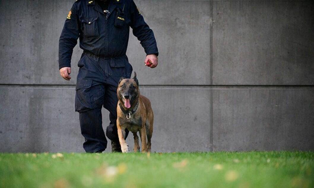 Politihunden Pelle har utmerket seg negativt kan ikke løpe fritt i hagen, har Politidirekoratet bestemt.