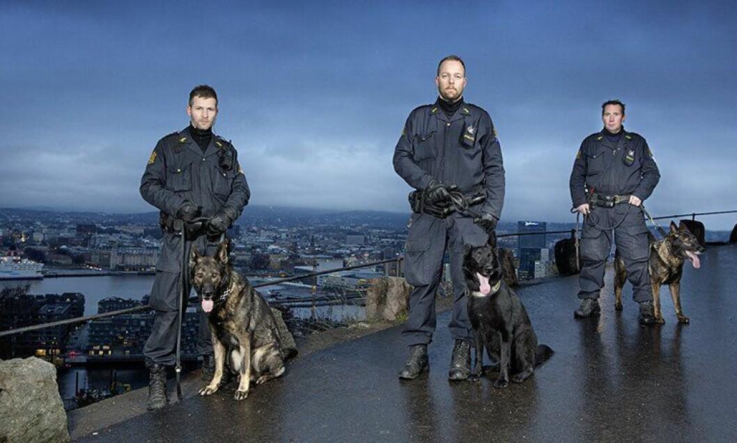 Kristian, Lars og Morten med hundene Nestor, Toffe og Blitz over Oslo by. De er klare for TV-skjermen fra mandag.