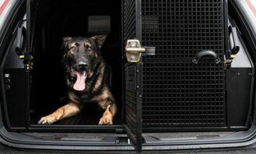 Politihunden Bjarne får nå bil med bedre bur. Det skal gjøre hverdagen mer behagelig.