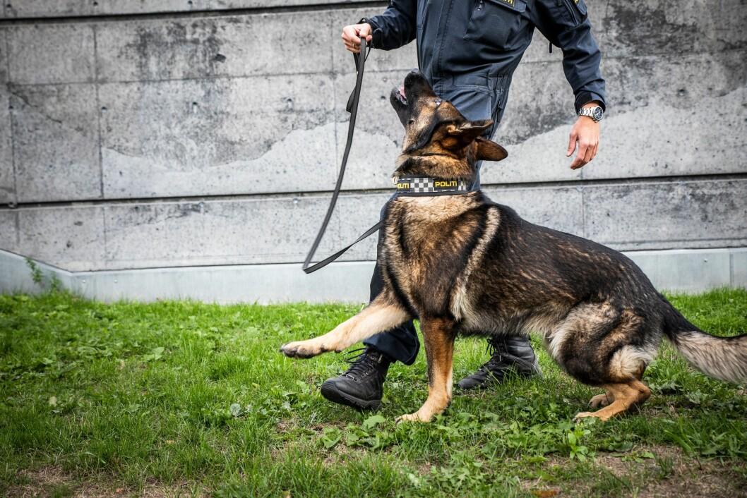Patruljehunden Wango har ett tett og godt forhold til hundeføreren sin, som han også bor hjemme hos.
