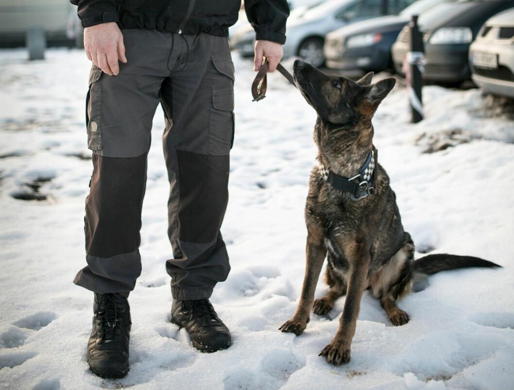 Hundeholdsgodtgjørelsen for godkjent politihund øker fra 4400 kroner til 8000 kroner i måneden.