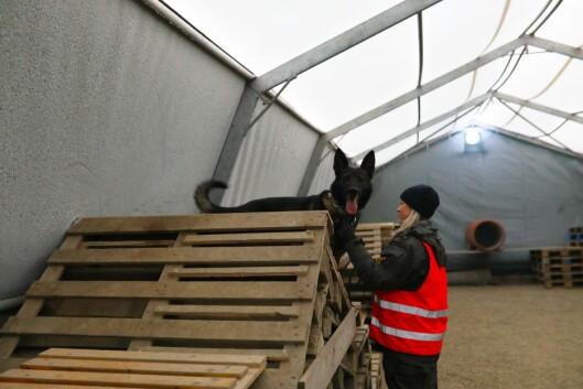 I HINDERLØYPA: Viktoria Eikeland og tjenestehunden Piqo.