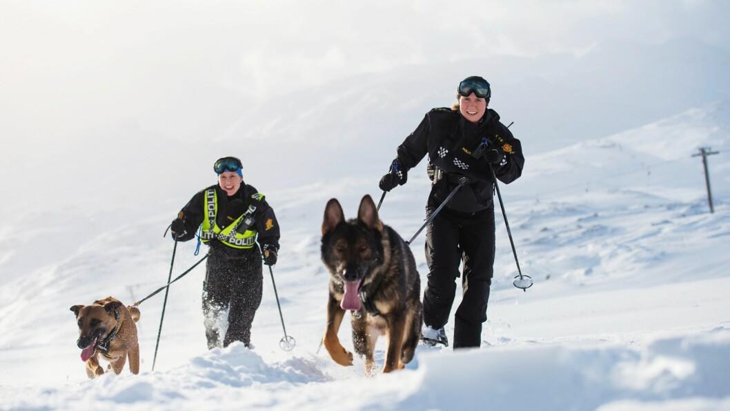 MOTBAKKE: Trugemarsj oppover hele alpinbakken i Røldal skisenter, var en del av lavinehundkurset.