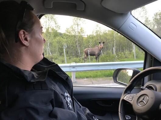 NÆRKONTAKT: Cathrine Røed møter den første elgen denne natta.