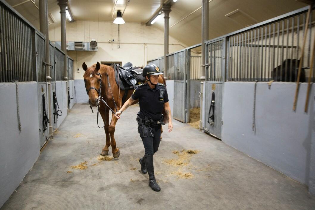 JOTUNHEIM: Alle politihestene får navn med norrøn opprinnelse. For tiden finner man blant andre Tyr, Loke, Hugin og Munin i stallen. Her gjør politibetjent Anita Løwehr seg klar til kveldens første økt med hesten Jotun.