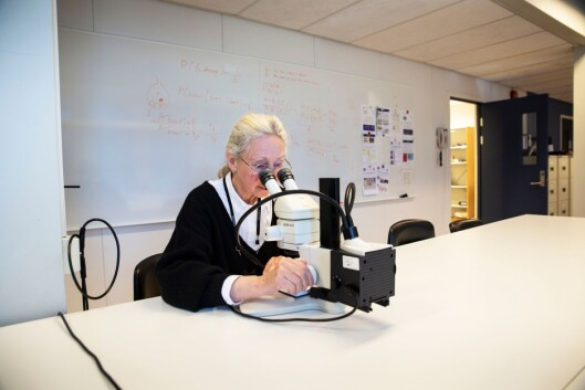 MIKROSKOPUNDERSØKELSE: Under lyset i mikroskopet er det mulig å analysere skriveretning og bokstavkonstruksjoner på skriften, for eksempel hvor- dan en liten «a» er utformet. Her er det også mulig å se etter riller eller skraper i papiret som kan indikere kopiering.