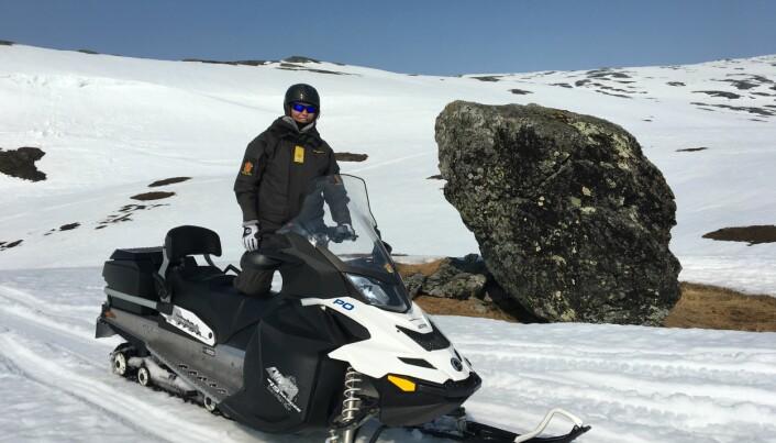 I april i fjor fikk Marit Fostervold være med reineier Anta Joma og bremse rein på Steinfjellet i Namsskogan, så de ikke kom for tidlig frem til kalvingsområdet.