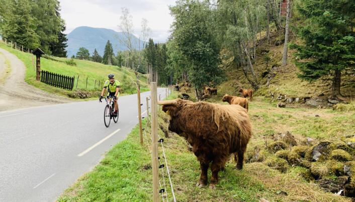 Arne Johannessen syklet til sammen 46 turer opp og ned Solvorn og tilbakela 274 kilometer på sykkel.